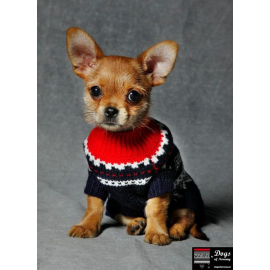 Marius dog sweater