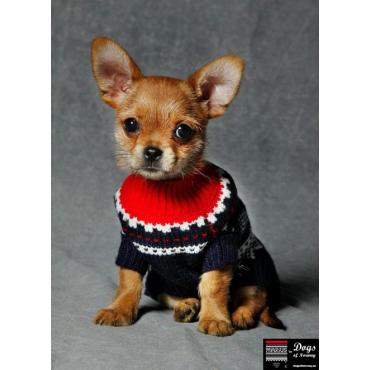 Utestående Marius dog sweater - Oslo Sweater Shop UB-32
